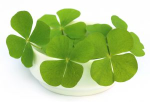 Decorative clover leaves on a white bowl
